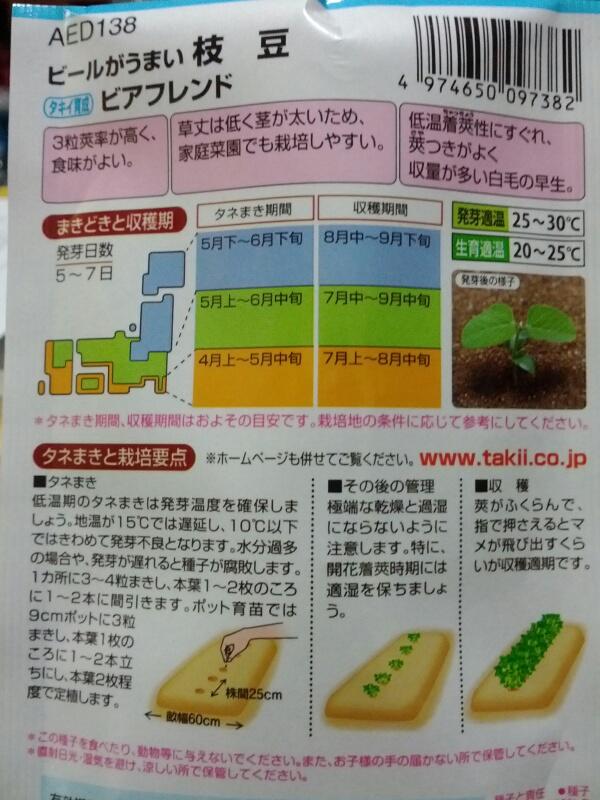 枝豆とインゲンの種まき